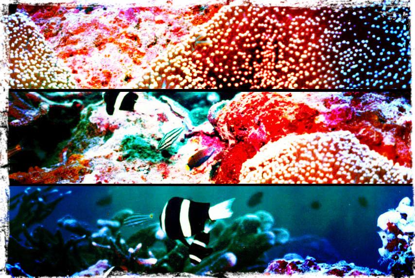 Das Barrier Reef an der Ostküste Australien