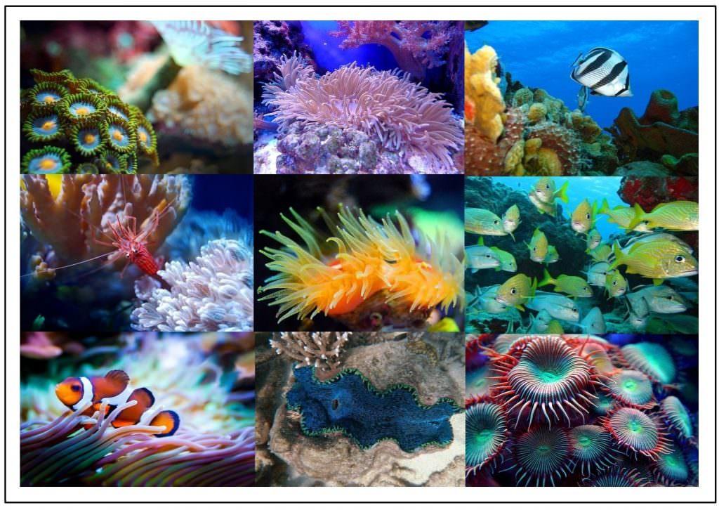 Barriere Riff Australien Meerjungfrauen Aquarii