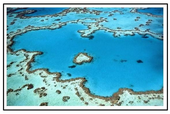 Riff Australien Aquarii Reef
